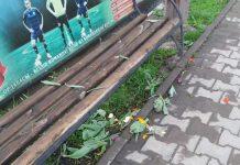 Вандалы в Шымкенте вырвали цветы с клумб