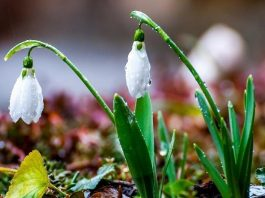 Весна в Шымкенте