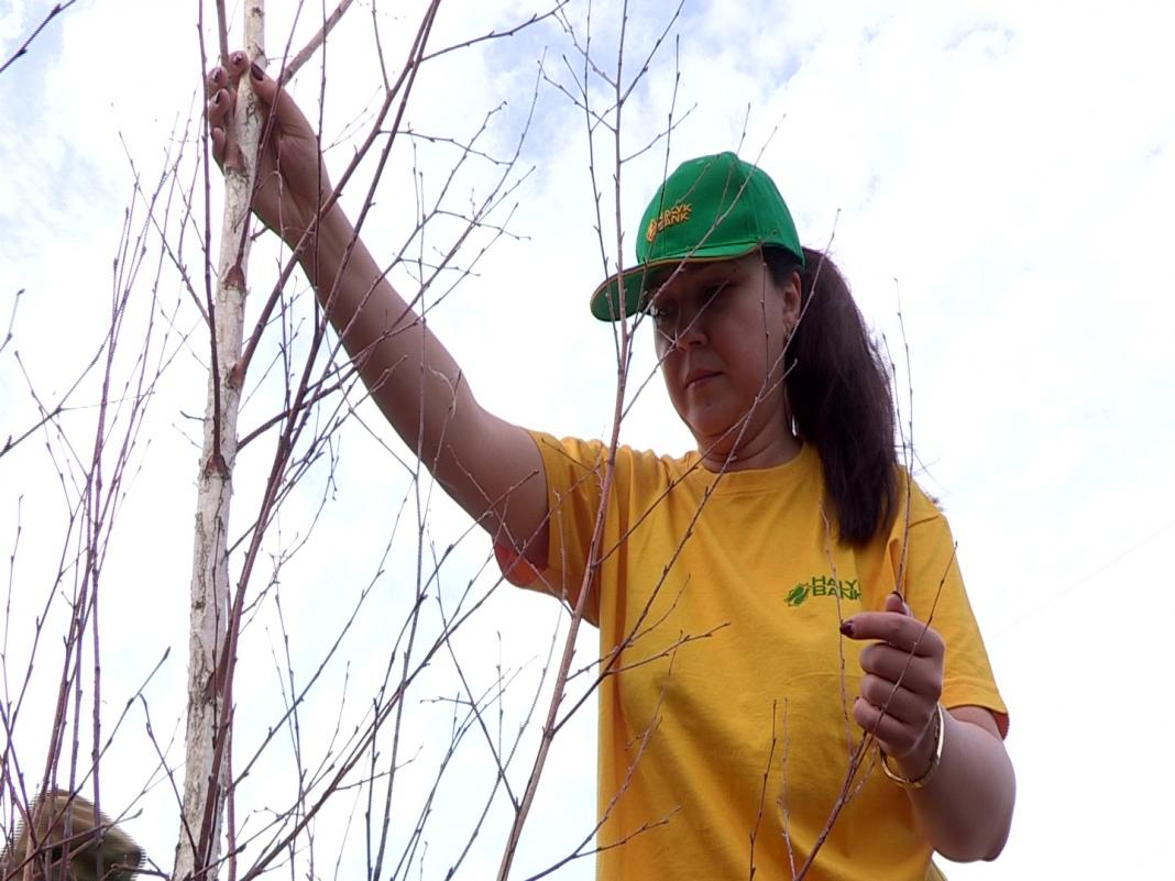 В посадке деревьев приняли участие сотрудники банка