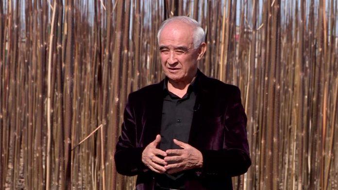 Предприниматель выращивает павловнии на юге Казахстана