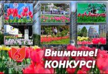 селфи с тюльпанами