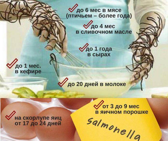 Сколько живет сальмонелла