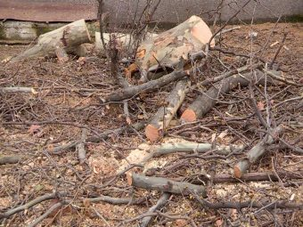 вырубка деревьев