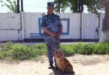 служебная собака обнаружила наркотики