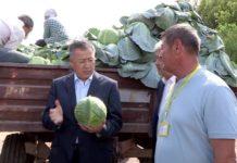 Аким ЮКО побывал на полях и узнал по какой цене крестьяне продают капусту