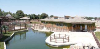 """В зоопарке Шымкента открыли свободную зону для животных - """"Африку"""""""
