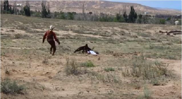 нападение беркута