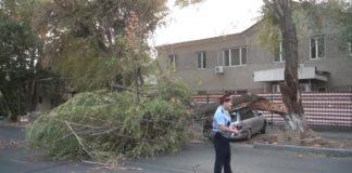 В Шымкенте дерево упало на автомобиль