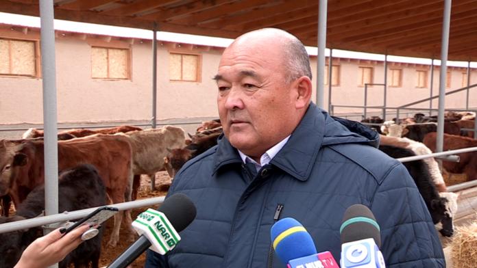 Cайрамские фермеры экспортируют мясо в Узбекистан, Китай и Иран