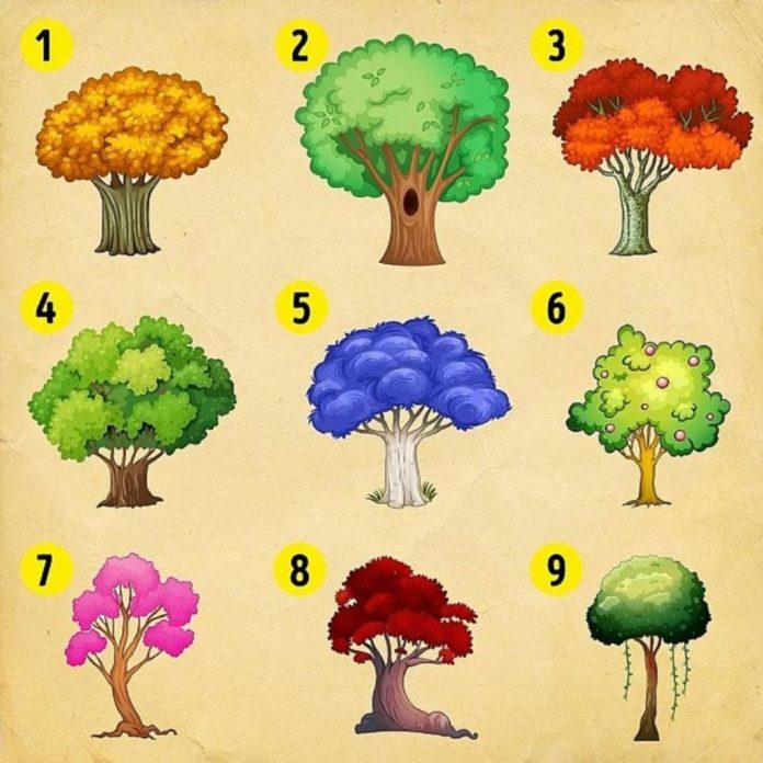 Выбранное дерево расскажет о том, какие изменения ожидают вас в новом году