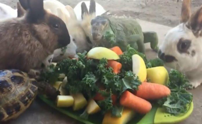 еда для животных
