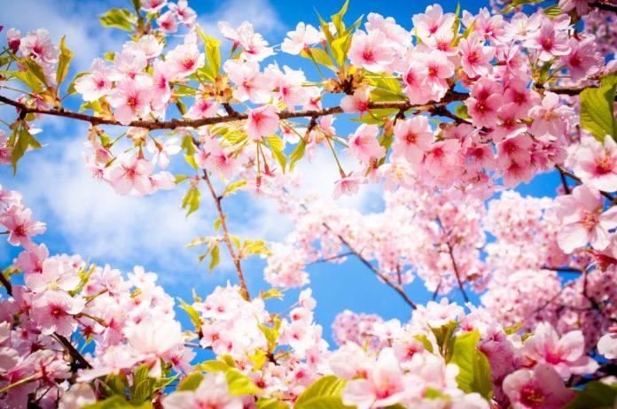 Франкофонная весна