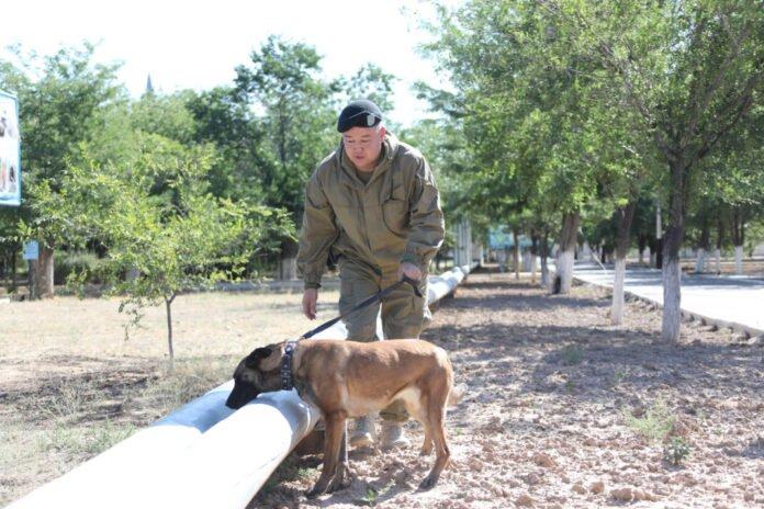 Военные саперы расчищают дворы и улицы Арыси от неразорвавшихся снарядов