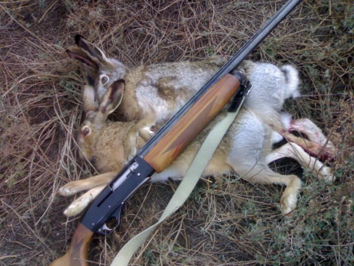 браконьеры, зайцы
