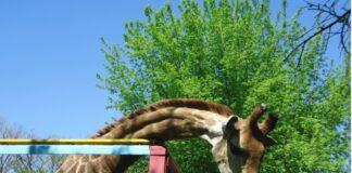 Как будет работать зоопарк Шымкента в День защиты детей
