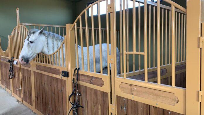 Испанский скакун (лошадь)